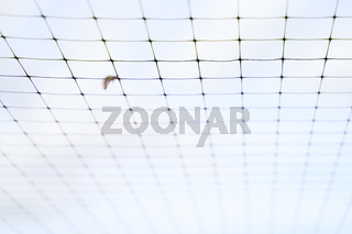 Small feather stuck in the wire mesh roof of the bird breeding farm on blue sky background