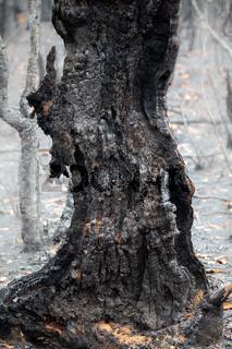 Burnt remains after bush fire