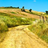 Dirt Road between Fields