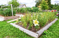 Flowers and vegetables grows at the vegetable garden