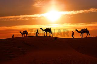 Cameleers, camel Drivers at sunset. Thar desert on sunset Jaisalmer, Rajasthan, India.