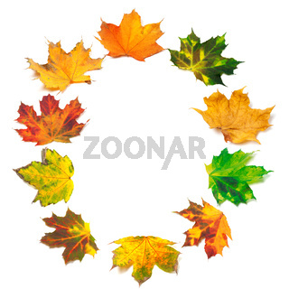 Letter O composed of autumn maple leafs