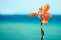 flower on a background of sea
