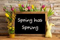 Tulip Flowers, Bunny, Brick Wall, Blackboard, Text Spring Has Sprung