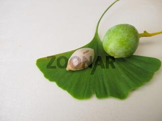 Ginkgosamen oder Ginkgonüsse und ein Blatt vom Ginkgobaum, Ginkgo biloba