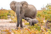 Elephant mother and baby on a nature in South Africa.