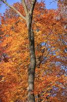Laubbaeume im Herbst