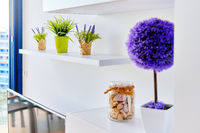 On shelf potted flowers in living room