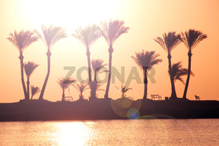 Silhouettes of palm trees on island on background of dawn. Dawn over tropics