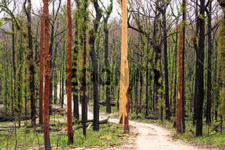 Australian bush land recovering after bush fires
