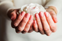 Woman's hands with beautiful tender manicure holding beautiful white rose.