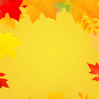 Autumn Poster Speech Bubble With Color Leaves White Background
