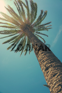 View Up Towards Tropical Palm Tree