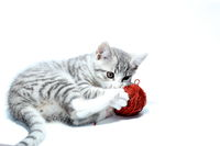 spielende kleine Katze