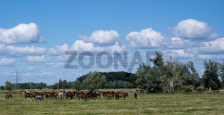 Pferdeherde beim Auslaufen auf einer Wiese