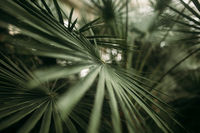 Green palm leaves with bokeh photo effect