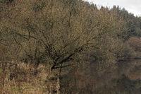 Ein Wintertag am Marbach-Stausee