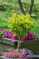 Small tree in Flower pot