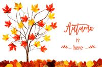 Tree With Colorful Leaf Decoration, English Calligraphy Autumn Is Here
