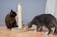 cats examining new cat tree