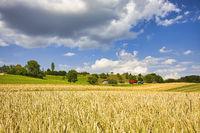 Getreideernte mittels Maschineneinsatz im Bodenseekreis