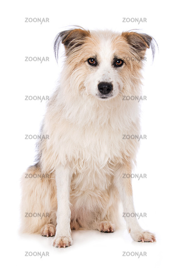 Cute dog sitting on white background