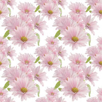 Seamless floral design with pink daisy flowers for background