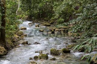 Creek leading up to the Kawasan Waterfalls in Badian on Cebu