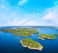 flock of migrating. Birds over beautiful blue lake with islands