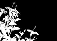 Black and White Floral Borders Background