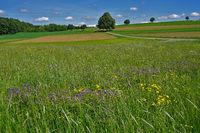 Landschaft  auf der Schwäbischen Alb bei St.Johann - Bad Urach