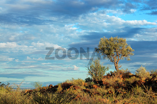 African landscape with a tree on a rocky ridge against a blue sky with clouds