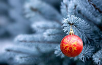 Red Christmas Ball hanging on a Fir Tree Branch. Christmas Background.