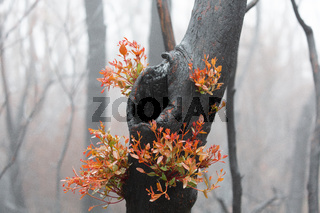 A burnt tree flourishing with bright new growth
