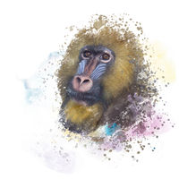 mandrill monkey portrait, watercolor