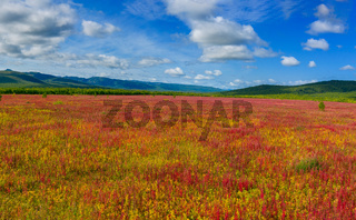 Blooming flowers willow-herb field