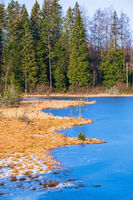 Bog at a frozen lake in winter