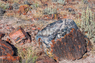 Petrified log in Petrified Forest National Park, Arizona