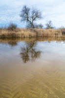 Reflection of a tree in a canal at lake Neusiedlersee
