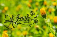 Yellow Spring Flower Meadow, Calligraphy Danke Means Thank You
