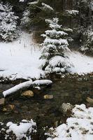 Winter scene in the Saanenland Valley.