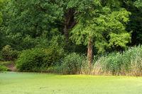 Tiergarten 025. Deutschland