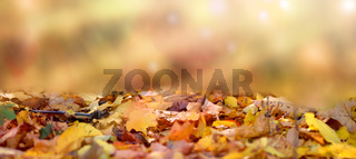 withered autumn leaves fly in fall forest