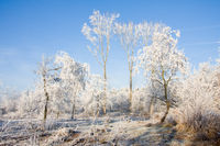 Winter landscape, trees covered with hoarfrost and clear blue sky