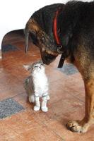 Hund und Katze sind befreundet