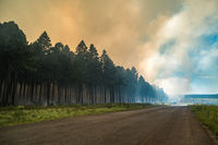 Wildfire, fire in a forest.