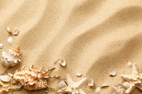 Seashells On Sand Background