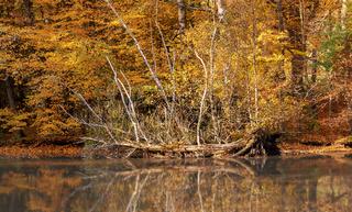 Herbstbild, Spiegelung am See