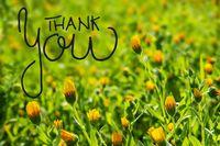 Yellow Flower Meadow, Calligraphy Thank You, Spring Season