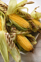 Corn on the cob grilled